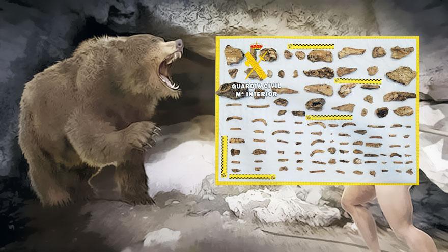 fósiles de osos cavernarios